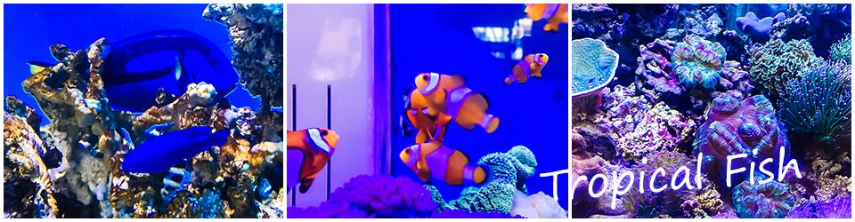 熱帯魚、海水魚